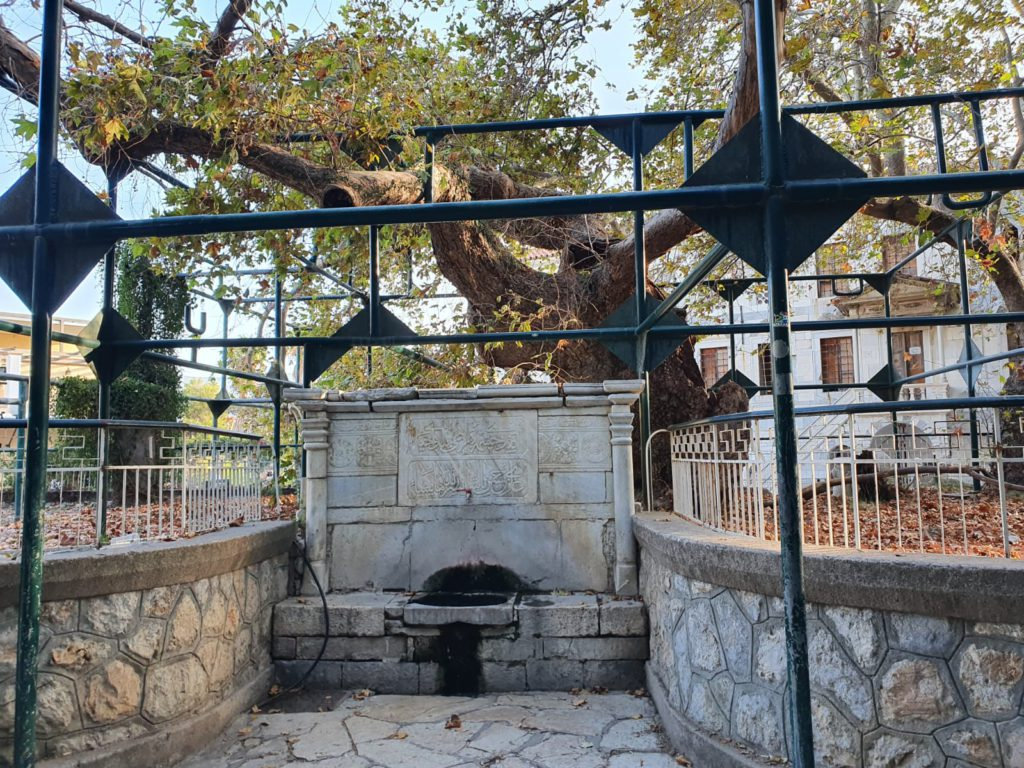 The Tree of Hippocrates Kos Town, Greece